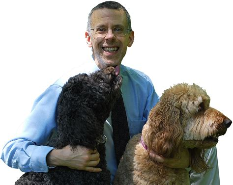 low platelets in dogs low platelets dogs naturally magazine