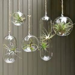 hanging air plant my cube life air plants low maintenance low cost desk