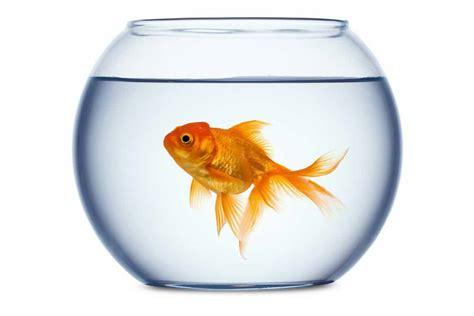 vasca pesce rosso il pesce rosso qualche consiglio