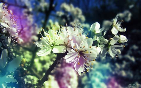 wallpaper abyss spring blossom full hd wallpaper and background image 1920x1200