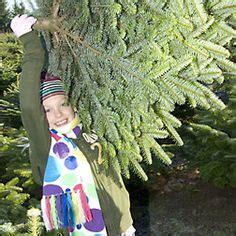 christmas tree farm sherwood oregon 1000 images about tree farms in the tualatin valley on tree farm