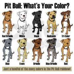 pitbull coat colors brindle coat pitbull colors breeds picture