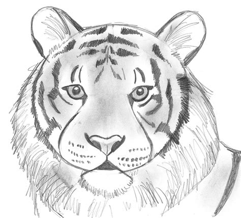 Draw 25 Wild Animals Even If You Don T Know How To Draw Samantha Bell Animal Pictures For To Draw