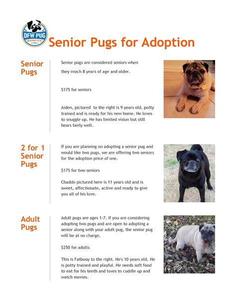 senior pug rescue senior pugs ready for adoption