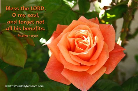 soul check 21 daily uplifts for those who want to live according to the spirit but their flesh overwhelms them books bible verse psalm 103 2 our daily blossom