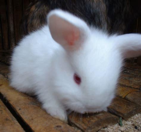 Kelinci Imut Lucu foto kelinci lucu dan imut banget gambarbinatang