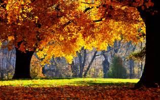 Pics photos free free fall desktop wallpaper downloads