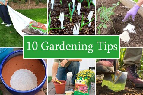 gardening tips 10 clever gardening tips and tricks for beginners