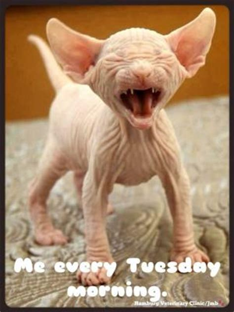 Ugly Cat Meme - ugly cat memes kappit