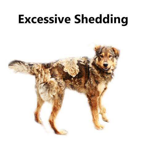 excessive shedding in dogs skin conditions you need to how to cure and treat them