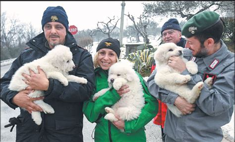 mark trahant pipeline fight highlights the power of rescuers hold three puppies that were found alive in the