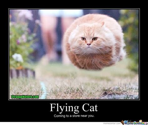 Flying Cat Meme - flying cat by sami chick meme center