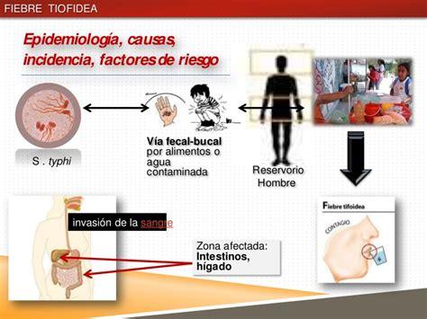 cadena epidemiologica fiebre tifoidea fiebre tifoidea