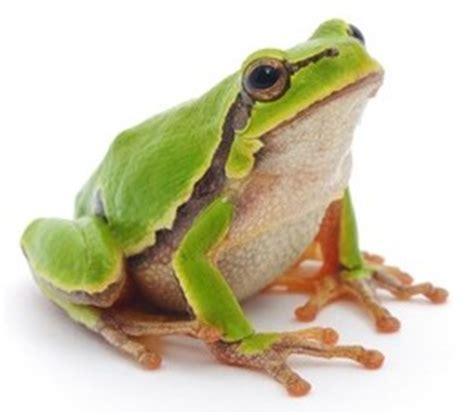 una rana a frog 8426350933 non facciamo la fine della rana bollita la mia partita iva
