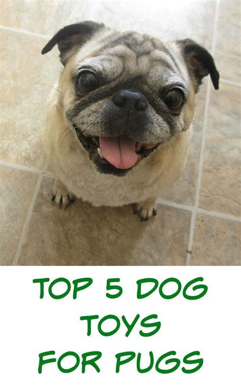best chew toys for pugs 358 best images about toys on dogs interactive toys and diy