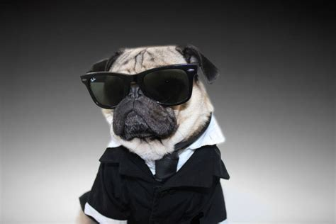 mib pug help doug the pug choose his costume