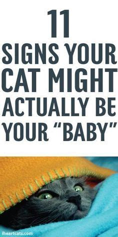 7 Signs You Might Be Being Played By A Womanizer by Cat To Be Kitten Me On For Cats Cats And Kittens