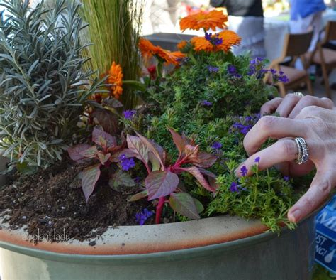 creative container gardening tips ramblings from a