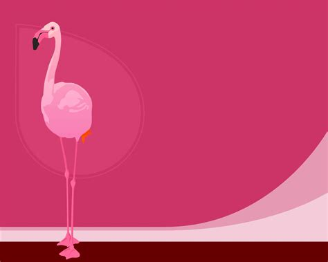 what color is a flamingo flamingo color wallpapers flamingo color stock photos