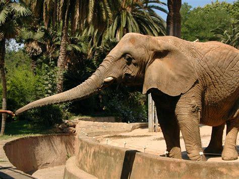 imagenes de animales del zoologico animales de zoologico related keywords animales de