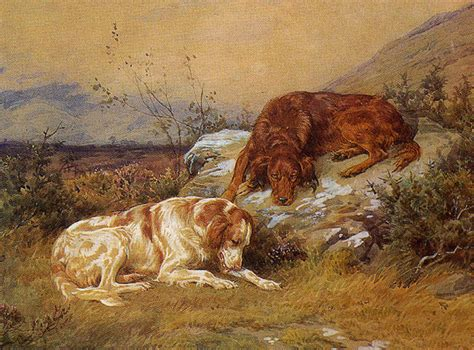 red setter dog wallpaper drawn irish red and white setter dogs photo and wallpaper