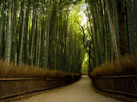 background hutan wallpapers bamboo forest wallpapers