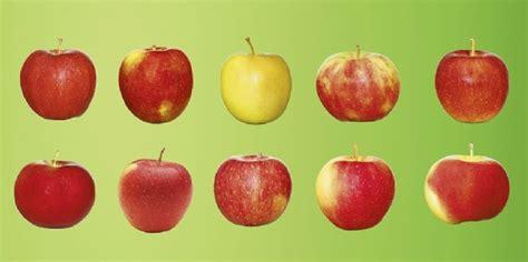 äpfel Alte Sorten 2951 by Frisch Saftig Steirisch Apfelsorten F 252 R Jeden Geschmack