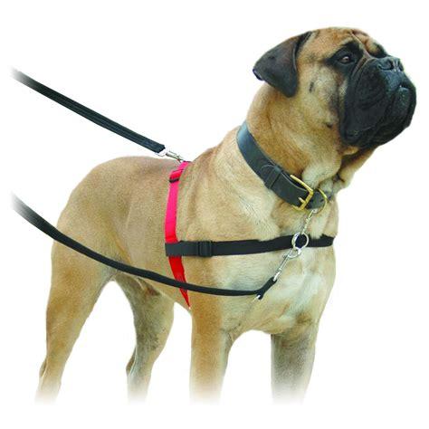 halti harness halti harness company of animals