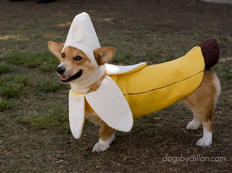 can dogs bananas dogs in costumes