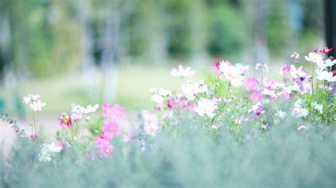 wallpaper meadows   wallpaper wildflowers flowers