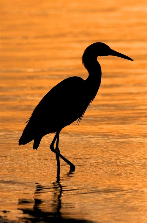 heron meaning symbolic meaning of the heron