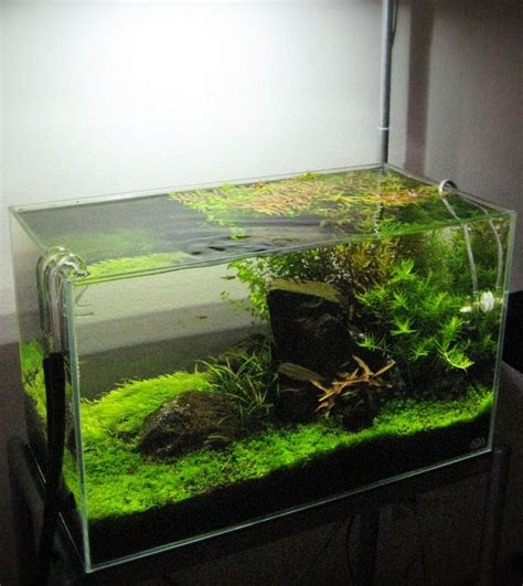 cute  gallon long aquarium   buy  gallon long
