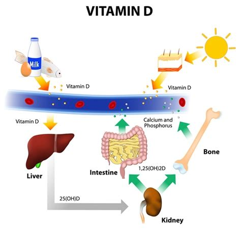 Uv B L For Vitamin D by Sun Exposure Positive And Negative Effects