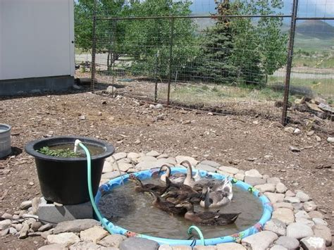 Backyard Duck Pond Ideas Best 20 Duck Pond Ideas On Pinterest Duck Coop Used Tractor Tires And Used Farm Tractors