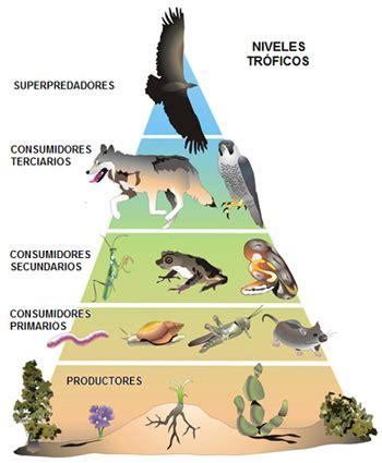 cadena alimenticia serpiente din 225 mica de los ecosistemas un gran mundo peque 209 o
