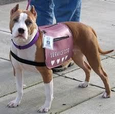my puppy to be a service can my pet be a service bully 174