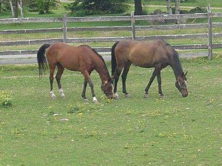 sudden rush ea dublin bay stables horse boarding farms in rush new york