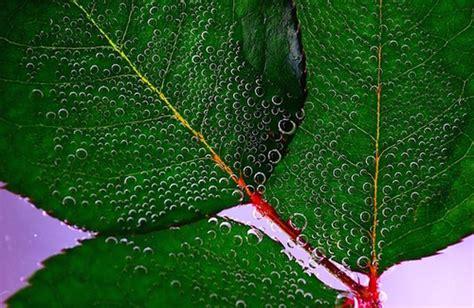 vasi capillari rotti miscela di oli essenziali per la pelle con capillari rotti