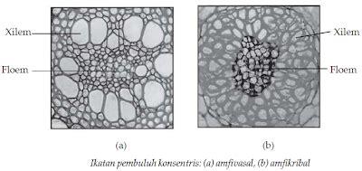 histologi tumbuhan