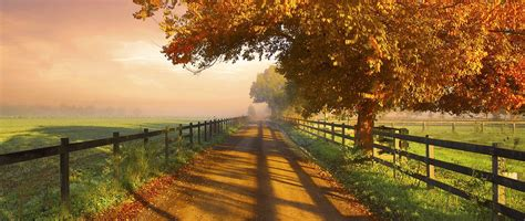 nature photography landscape fence dirt road morning