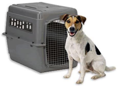 airline pet cargo crate requirements pettravelcom