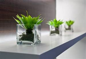Small Plants For The Desk Bring The Outdoors In Decorate With Houseplants Garden Club