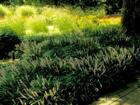 popular landscaping groundcovers and shrubs popular landscaping groundcovers and shrubs diy