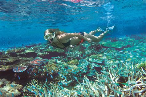 Quicksilver Cuba 3 cairns and port douglas reef trips 3 day ultimate great