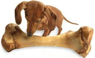 alimenti velenosi per cani i cibi velenosi per il e gli alimenti da evitare
