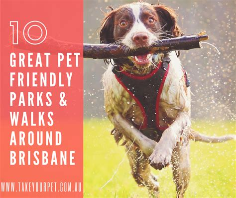 friendly parks great pet friendly parks and walks around brisbane take your pet