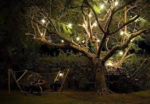 outdoor lights on trees outdoor tree lights let there be light