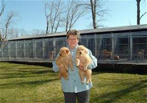 golden retriever puppies in pittsburgh pa golden retriever puppies pittsburgh assistedlivingcares