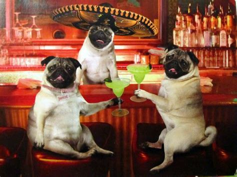 mexican pug cinco de mayo 7 places worth checking out miami food pug