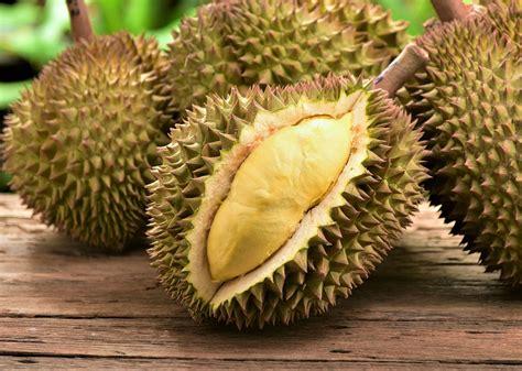 durian fruit  man  fail breathalyser